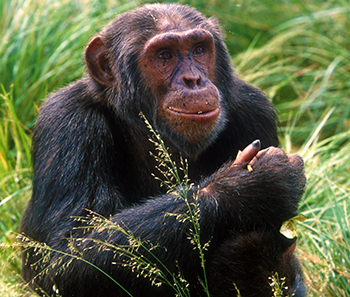 ACTION: Help us pass the Humane Care for Primates Act