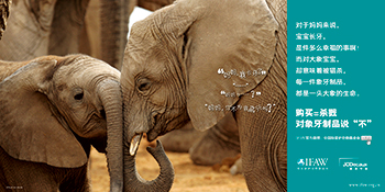 "By simply making Chinese  people  aware that every piece of ivory comes from a dead elephant, IFAW's ad campaign ""Mom, I have teeth""  successfully reduced the high risk segment of people—those who are most likely to buy ivory—down almost by half, from 54% to 26%."