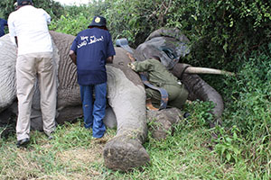 Securing corridors for elephants and mitigating human elephant conflict