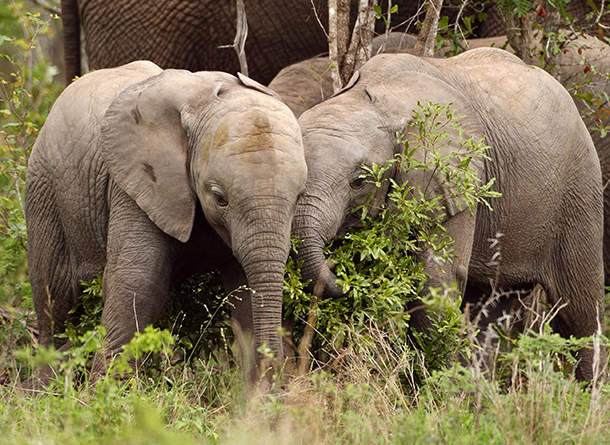 We love New York's ivory ban