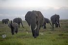 Weekend Ivory Seizures in Kenya/Thailand