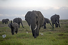 New article examines U.S. contribution to elephant poaching crisis in Africa