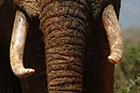 Former les forces de l'ordre en Afrique pour lutter contre le trafic d'ivoire