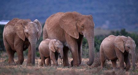 Elephants need our help