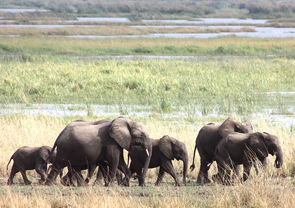 Elephants need space for their survival but their habitats are becoming increasi