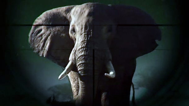 "TUNE IN: Powerful anti-wildlife trade film ""Gambling on Extinction"" airing on An"