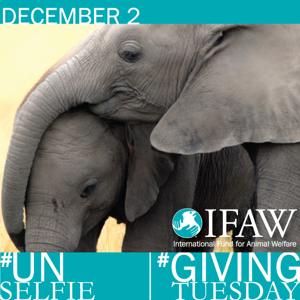 This #GivingTuesday, send a get well selfie to Suni the elephant