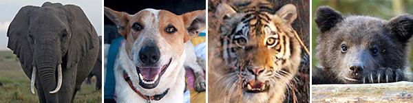 Tierschutzthemen 2014: Was ist Ihnen wichtig?