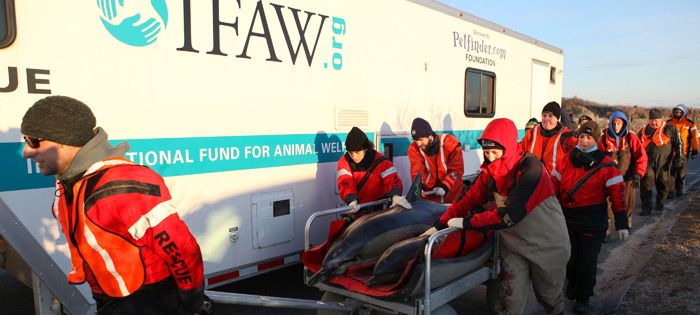Marine mammal rescue and research
