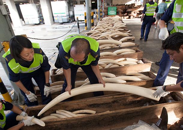 In Hong Kong weten we dat het verbranden van ivoor helpt bij het redden van olif