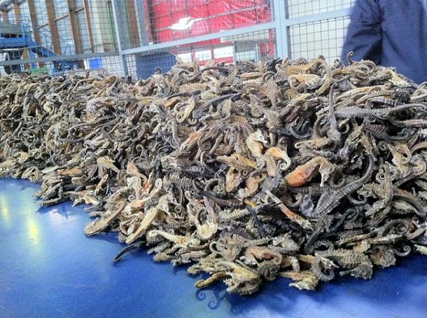 Des milliers d'hippocampes déshydratés saisis par les douaniers de Roissy - Crédit photographique @Douane française