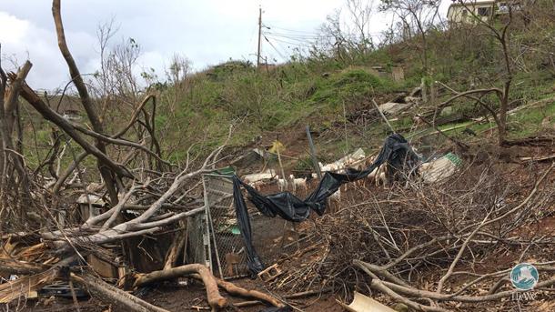 Intervention d'urgence : Retour aux Îles vierges américaines