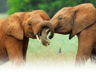 Take action for elephants