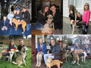 Dogs from Cozumel, Mexico now in their Canadian homes.