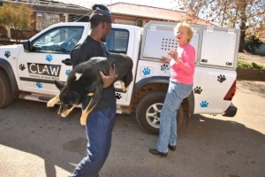 https://blog.ifaw.org: The poisoned dog from Snake Park who survived a poisoning is offloaded at the clinic.  He is doing well and is expected to make a full recovery.