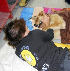 Northern Dogs volunteer, Stef, comforts Timber after he was neutered at the firehall.