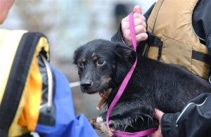 A dog rescued by IFAW teams during Hurricane Katrina.
