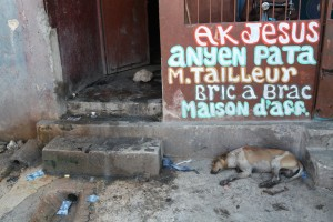 A Hatian dog in an alley in Port-au-prince.