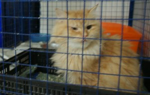 Makky, the cat.