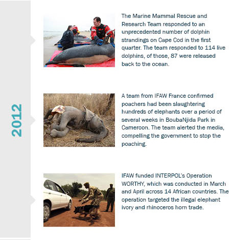 History Of Ifaw Ifaw International Fund For Animal Welfare