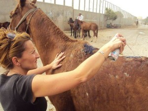 Beth Sartain helps an injured horse in Egypt.