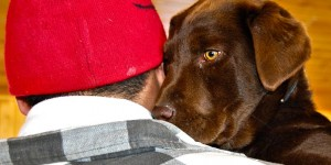 Coco, a young chocolate lab, was brought in for vaccinations only.
