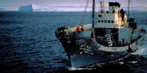 Is the sun setting on Japanese commercial whaling?