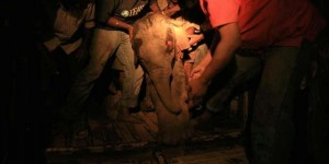 An elephant calf who had fallen into a cave and was trapped being rescued by IFAW-WTI staff.