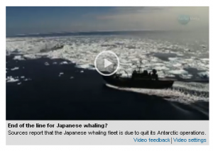 The Sydney Herald ran a video this morning about the retreat of the Japanese whaling fleet from the southern ocean sanctuary.