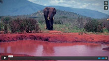 Elephants Never Forget Video