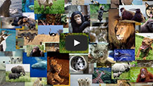 Keep Wild Animals Wild Video