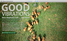 African Geographic Digizine Good Vibrations
