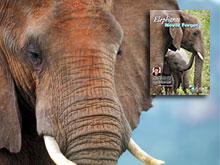 Elephants Never Forget