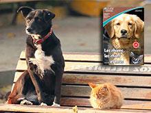Les chiens, les chats et nous