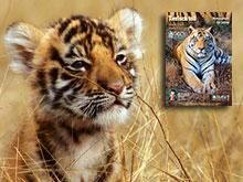 Mach Dich stark für Tiger