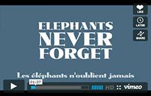 Vidéo | Les éléphants n'oublient jamais