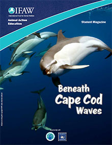 Beneath Cape Cod Waves Regional Program