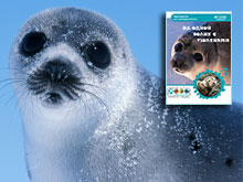 Making Waves for Seals