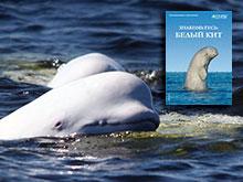 Meet the Belugas