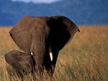 Animal Explorers Elephant Booklet
