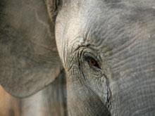 Discover Elephants