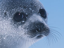 Discover Seals