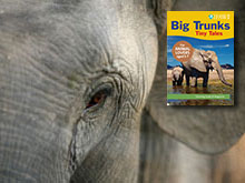 Big Trunks, Tiny Tales
