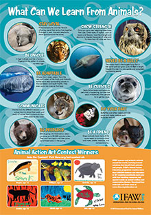 Animals & Us Poster