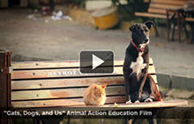 Cats, Dogs, and Us Video