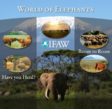 World of Elephants Interactive Poster