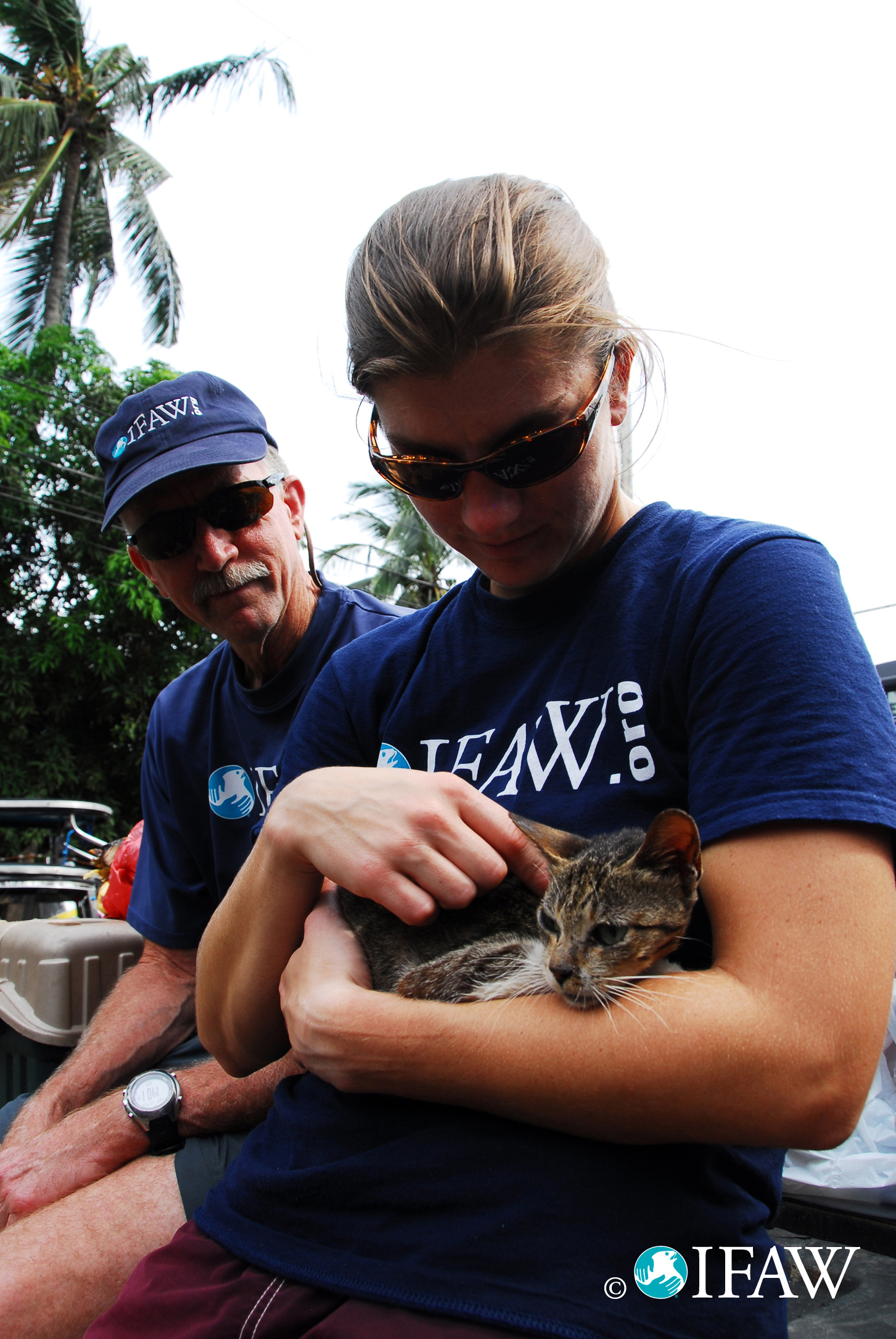 Www Ifaw Org Australia Dogs Cats And Us