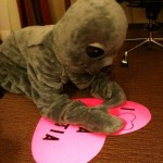 Sally the Seal making her Valentine.