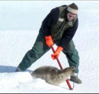 Seal_hunt