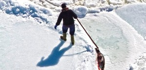 A Canadian sealer dragging a harp seal across the frozen waters off Newfoundland and Labrador.
